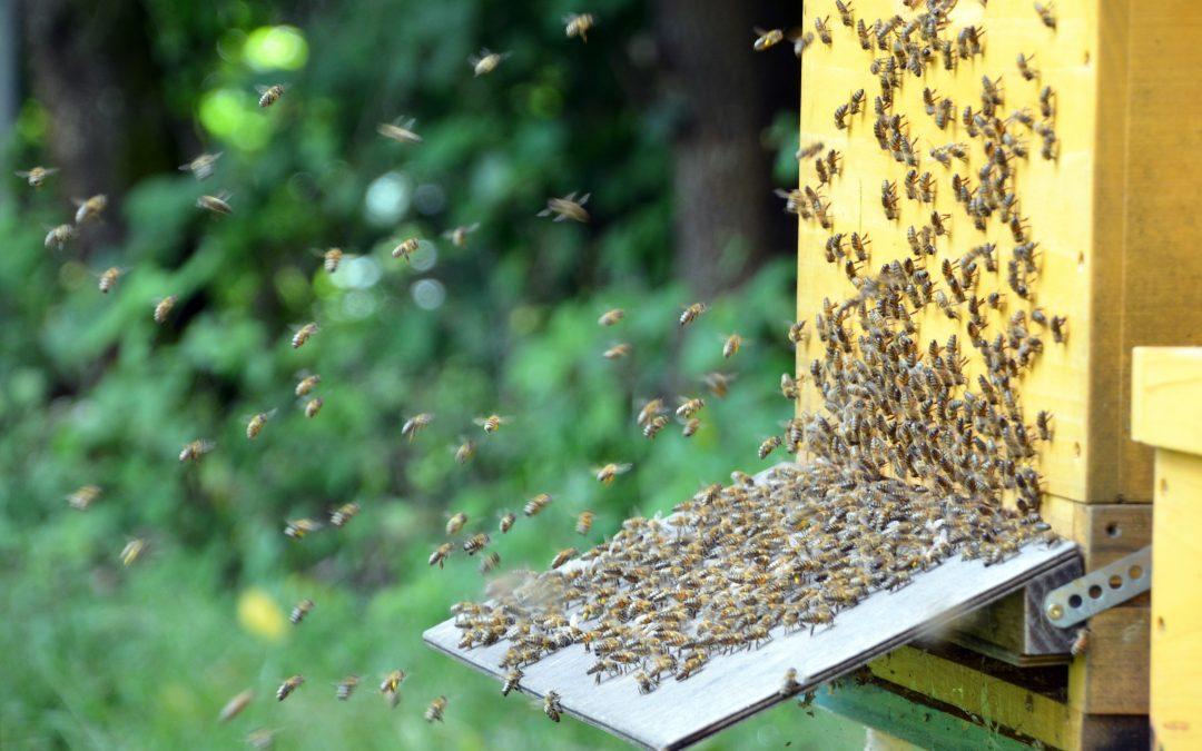 Die BBSbees – Das erste Jahr unserer Schulbienen